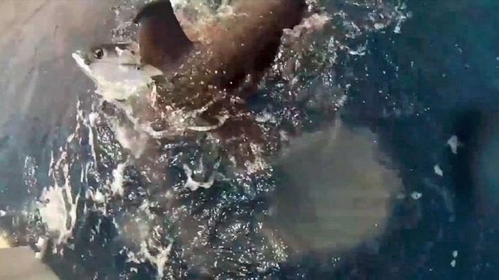 Her stjeler haien storfangsten