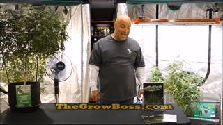 Marijuana Garden Rescue Watts Weight And Rotations Part 2