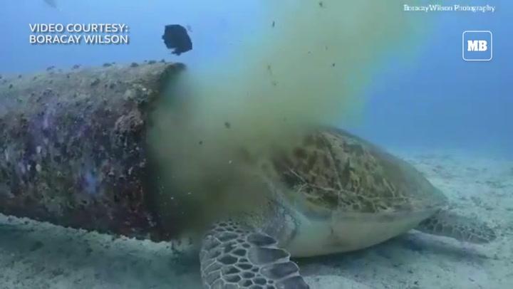 Indignación por una tortuga marina en peligro de extinción comiendo desechos