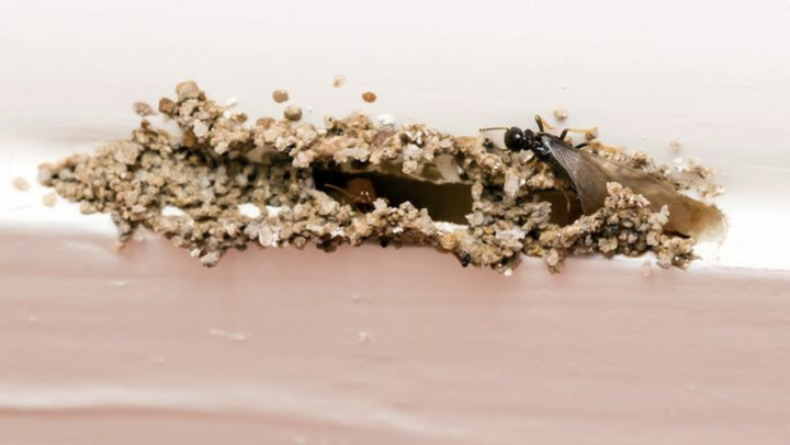Head Off a Termite Invasion: 5 Smart Strategies