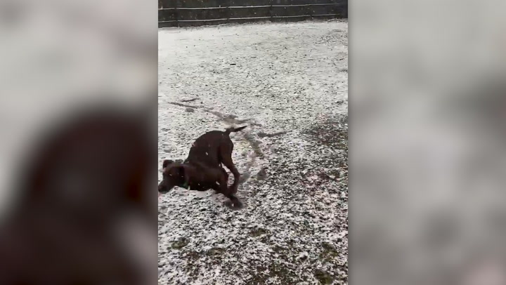 Dog experiences its first snow in Alabama