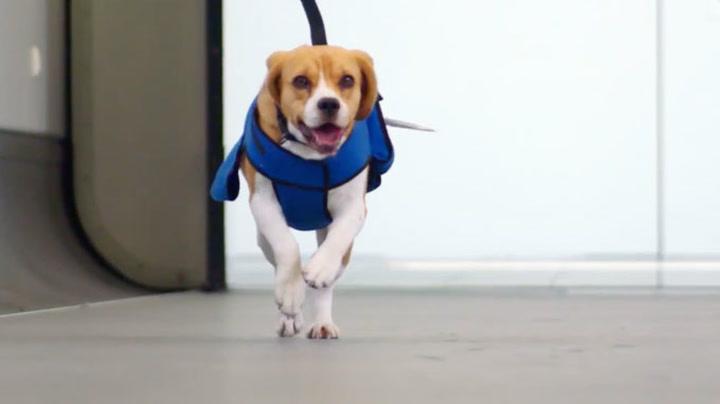 Hund med helt spesiell flyplassjobb