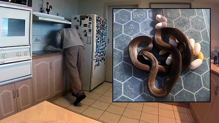 Gjorde skrekkfunn bak kjøleskapet
