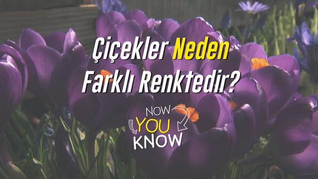 Now You Know - Çiçekler neden farklı renktedir?