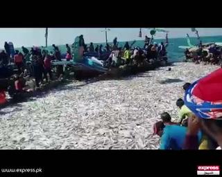 کراچی میں ماہی گیروں کے وارے نیارے ، ٹنوں مچھلی ہاتھ لگ گئی