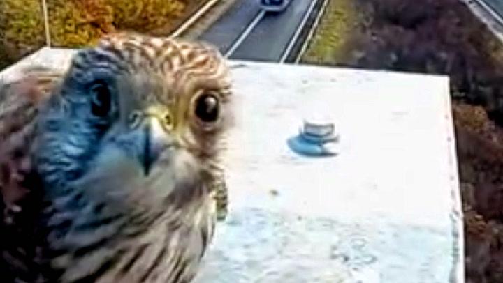 Linselus med falkeblikk på trafikkamera