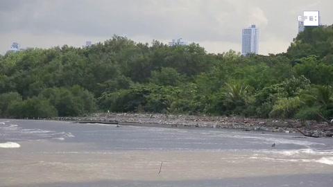 El manglar de la Bahía de Panamá, amenazado por la presión humana y el clima