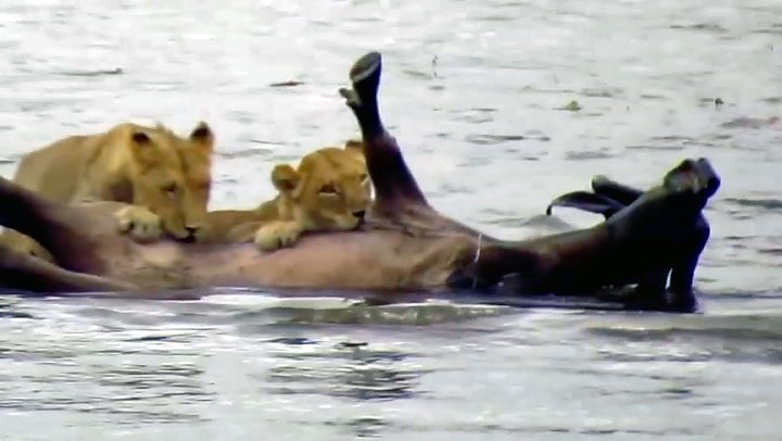Turister ble vitne til dramatisk dødskamp i elven