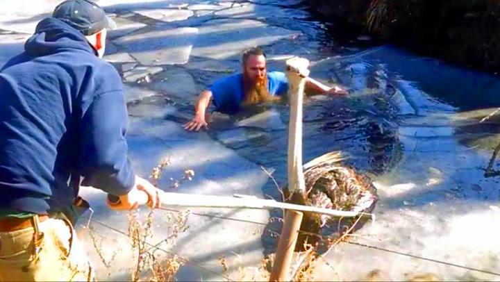 Struts gikk gjennom isen – så kom hjelpen
