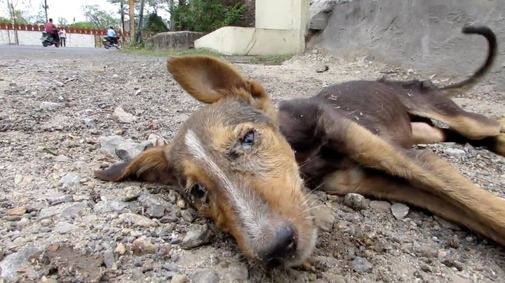 Døende hund logrer tappert da hjelpen kommer