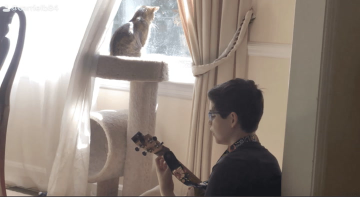 Adorable 12-year-old boy serenades kitten with a ukulele