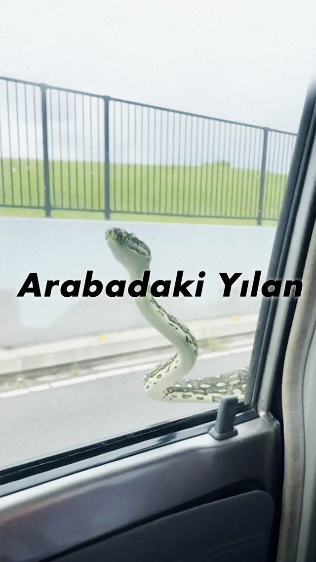 Yılandan daha korkuncu arabadaki yılan