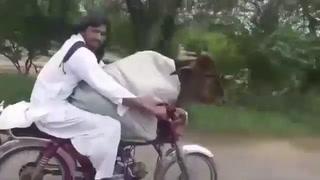 Pakistán: Hombre pasea a su vaca en motocicleta