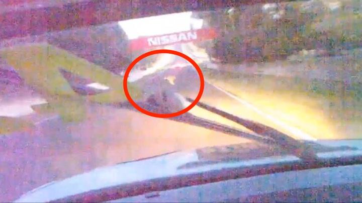 Sjåføren traff dyr i 220 km/t