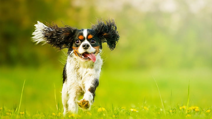 Best Dogs For An Apartment Breeds That Fit Your Tiny E Realtor