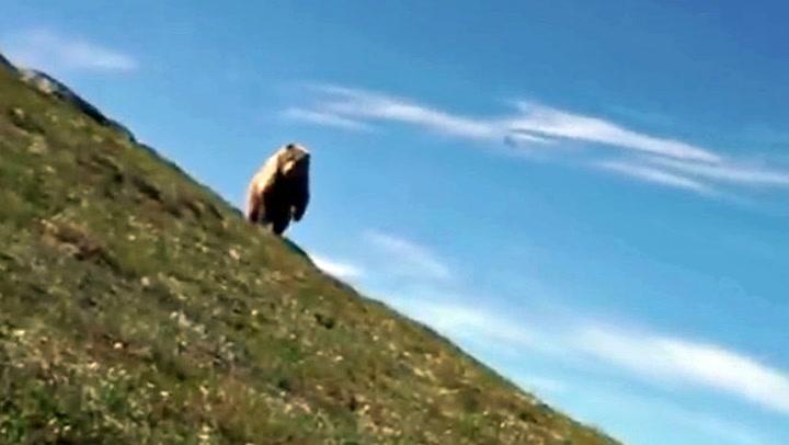 Her kommer bjørnen stormende: – Jeg var veldig heldig!