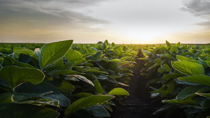 Chia Founder Bram Cohen Talks 'Green Farming' and Future IPO