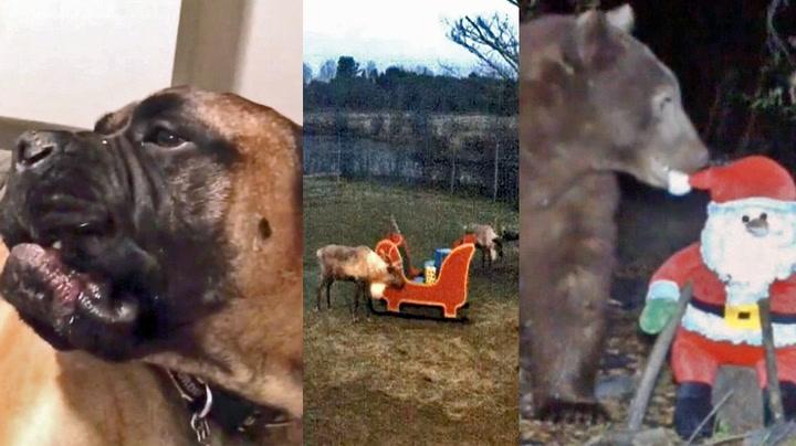 Tre dyr som hater julen