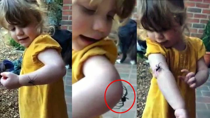 Fryktløs jente leker med edderkopp på armen