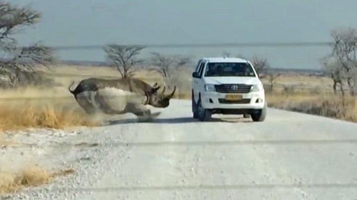 Neshorn gikk til angrep på turistbil