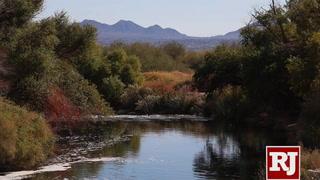 Clark County Wetlands promotes 2019 Wetland Walker Program
