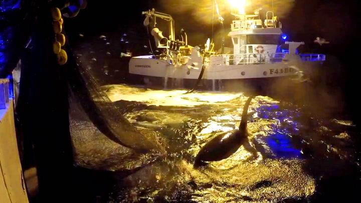 Fiskere i Troms fikk eventyrlig besøk