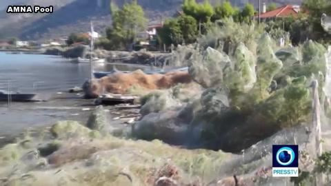 Una telaraña gigante envuelve y sorprende a un pueblo de Grecia