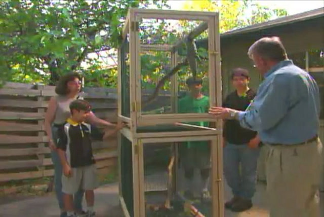 Opinion, adult iguana cages