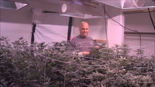 Marijuana Garden Rescue- How To Figure Out Light Yield Plant Count And Bucket Size