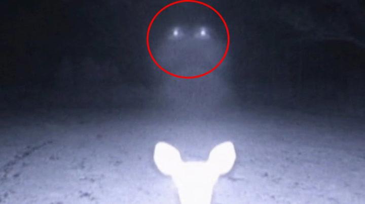 Her fanges UFOen opp av viltkamera