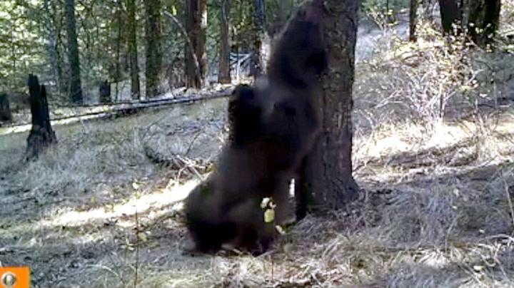 Det bjørner gjør når vi ikke ser