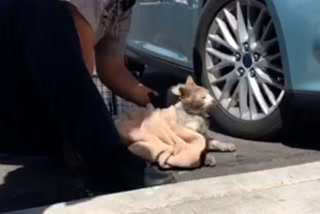 Cat survives 15-mile commute in car bumper