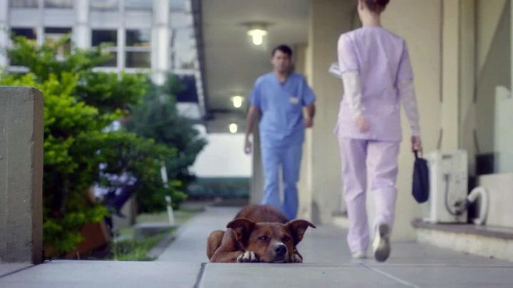 Hundens lojalitet kjenner ingen grenser