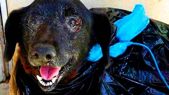 Blackie ble levert på herberget i en søppelpose