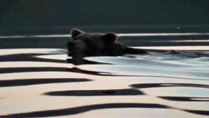 Bjørnen svømmer bare meter unna ham