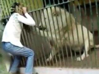 کراچی چڑیا گھر میں ببر شیر نے ملازم کا ہاتھ دبوچ لیا