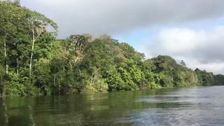 Temores por el futuro de la Amazonía con Bolsonaro en Brasil