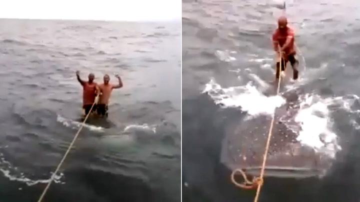 Surfer på utrydningstruet hai