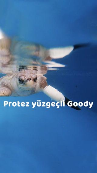 Protez yüzgeçli Goody