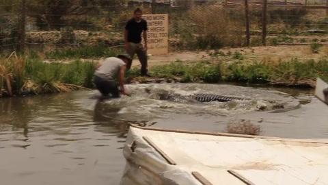Un cocodrilo casi le arranca la mano a un cuidador que transmitía en vivo
