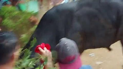 Miles de creyentes celebran corrida de toros en Nicaragua pese a pandemia