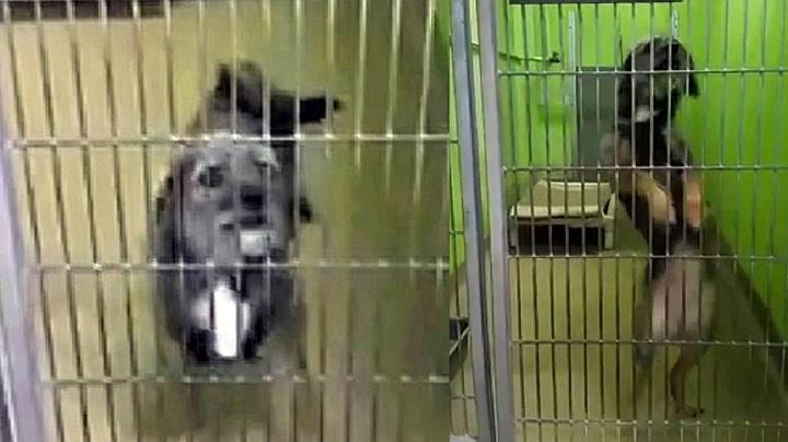 Hjemløs hund søker dansepartner