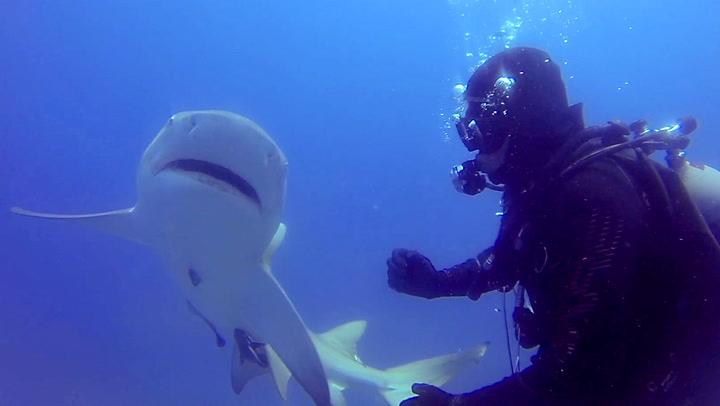 Skadd hai ber dykkere desperat om hjelp