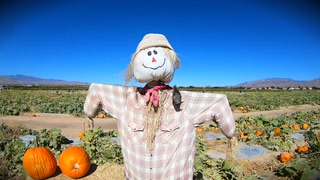 Gilcrease pumpkin patch is open – VIDEO