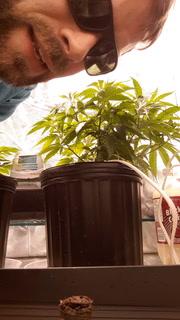 How I clone cannabis (part 1)