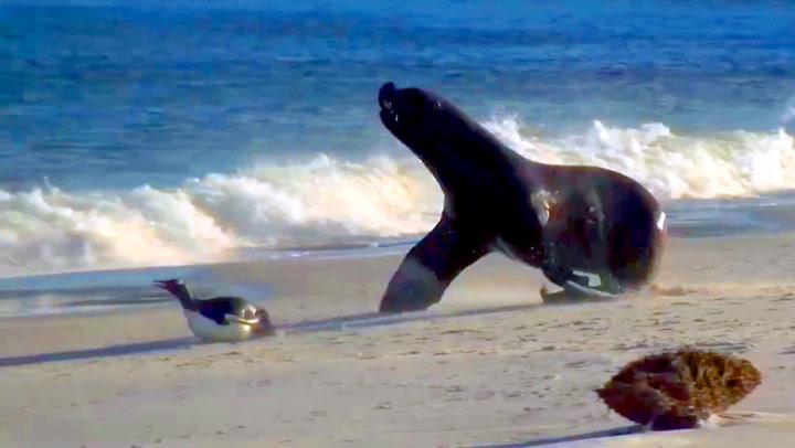 Pingvinens desperate dødsflukt