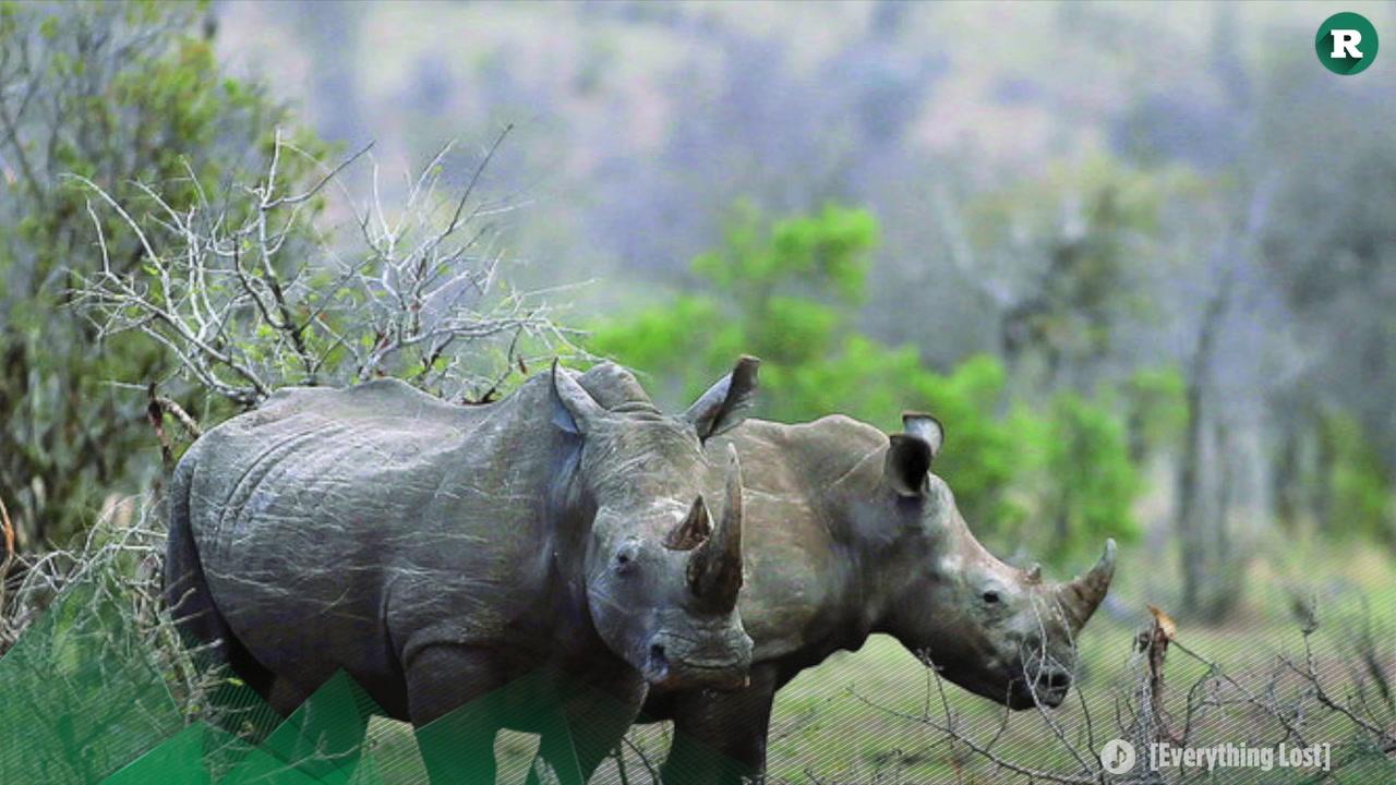 La masacre del rinoceronte