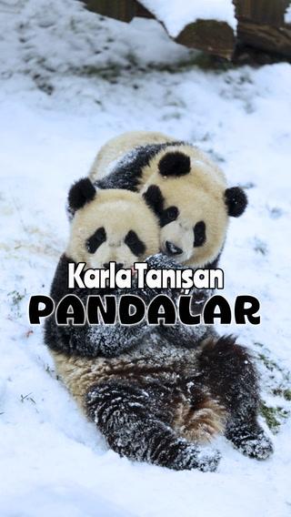 Kar gören masum pandalar