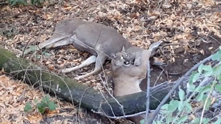 Ble vitne til hjortens desperate dødskamp