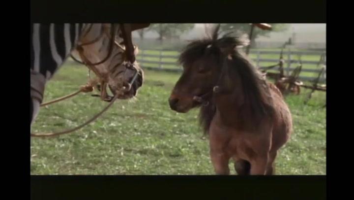 Film Fixation - Talking Animals - Racing Stripes